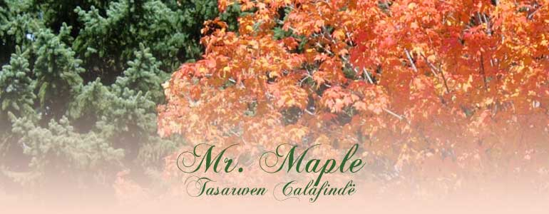 mr maple